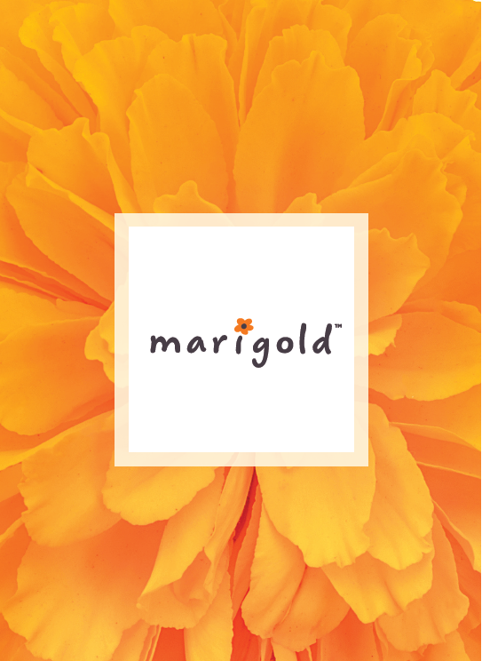 Marigold, QVC's private line of whimsical and playful garden accents