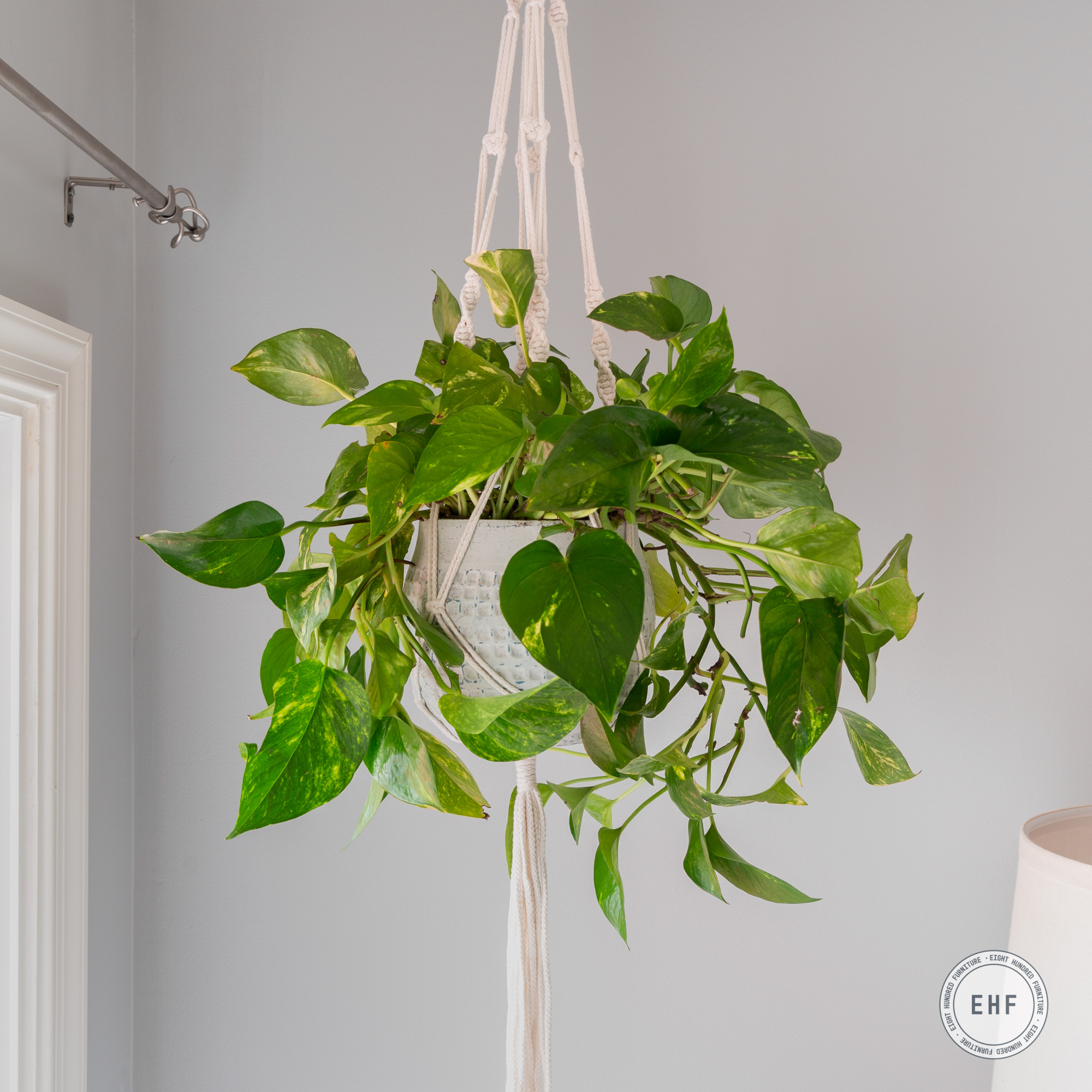 Macrame plant hanger with ceramic pot painted in Miss Mustard Seed's Milk Paint in the color Mora by Eight Hundred Furniture